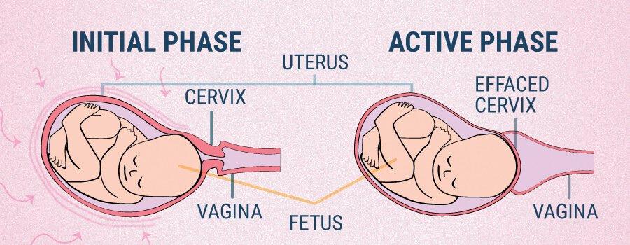 Cbd And Pregnancy
