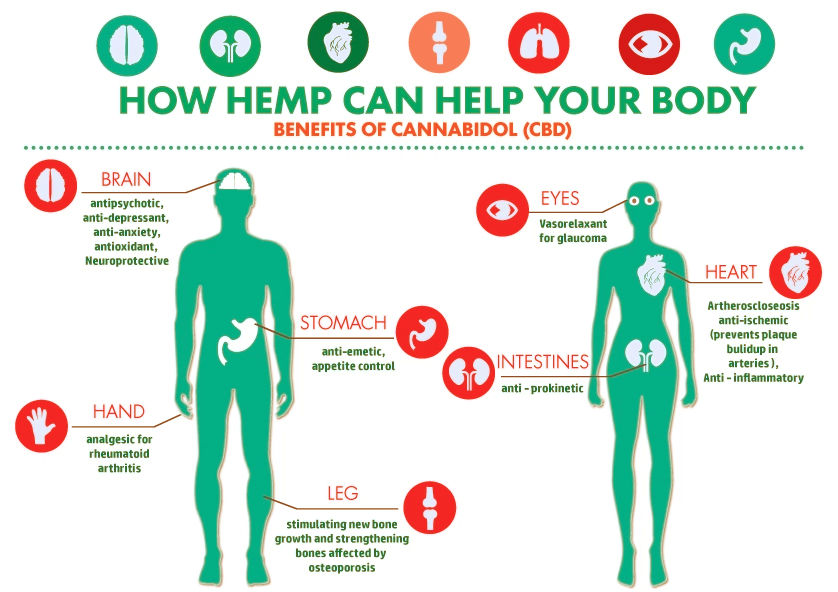 Cbd Oil Effects On Body