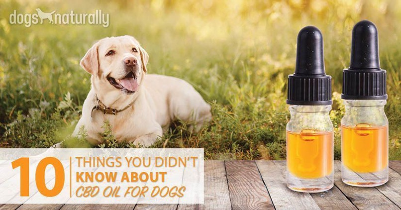 Cbd Oil For Hyper Dogs