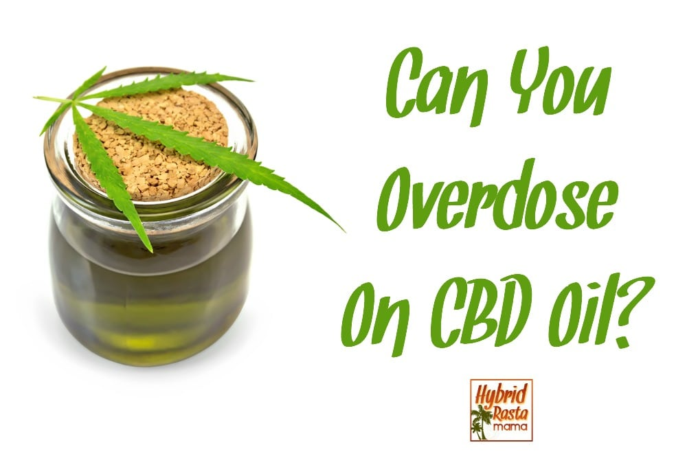 Cbd Overdose