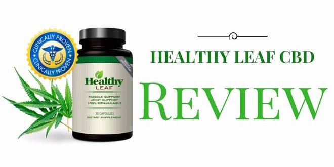 Healthy Leaf Cbd Oil