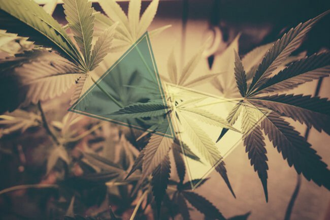 How Does Cbd Oil Counteract Thc