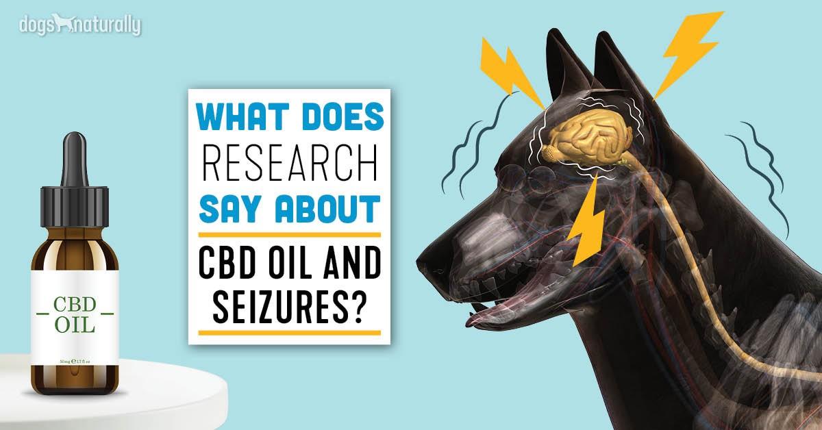 How Often Do I Give My Dog Cbd Oil For Seizures