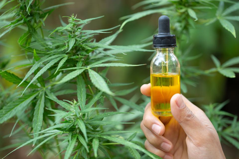 Marijuana Based Cbd Oil
