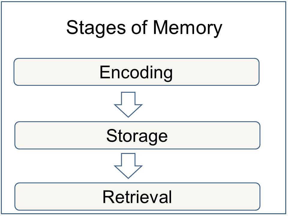 Memory Definition Psychology
